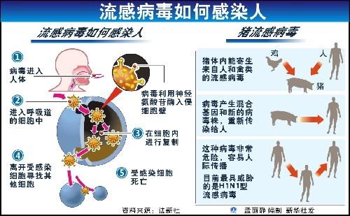 Was tun bei Schweinegrippe H1N1  Behandlung amp Infos