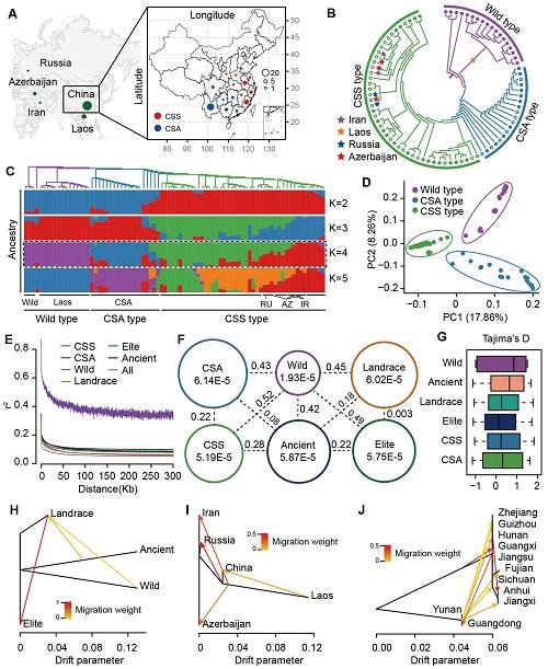 茶树群体结构与遗传多样性.jpg