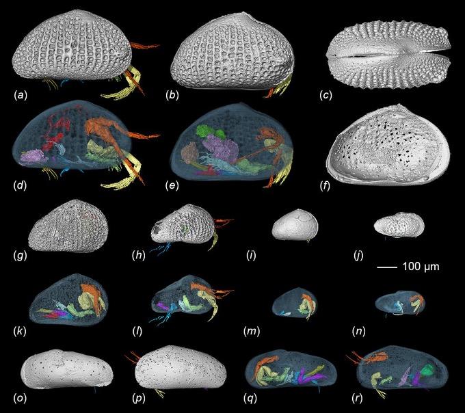 揭秘1亿年前介形虫有性生殖行为