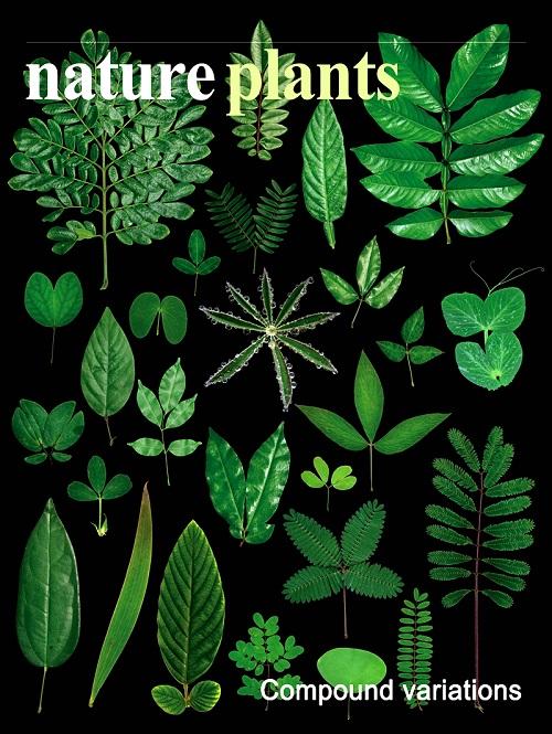 研究成果被选为Nature Plants封面故事.jpg
