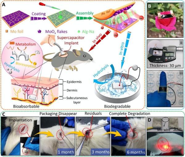 柔性、可降解、可体内吸收的植入式高性能超级电容器的制备流程,以及在体内体外环境中的生物降解过程与应用实例。.jpg