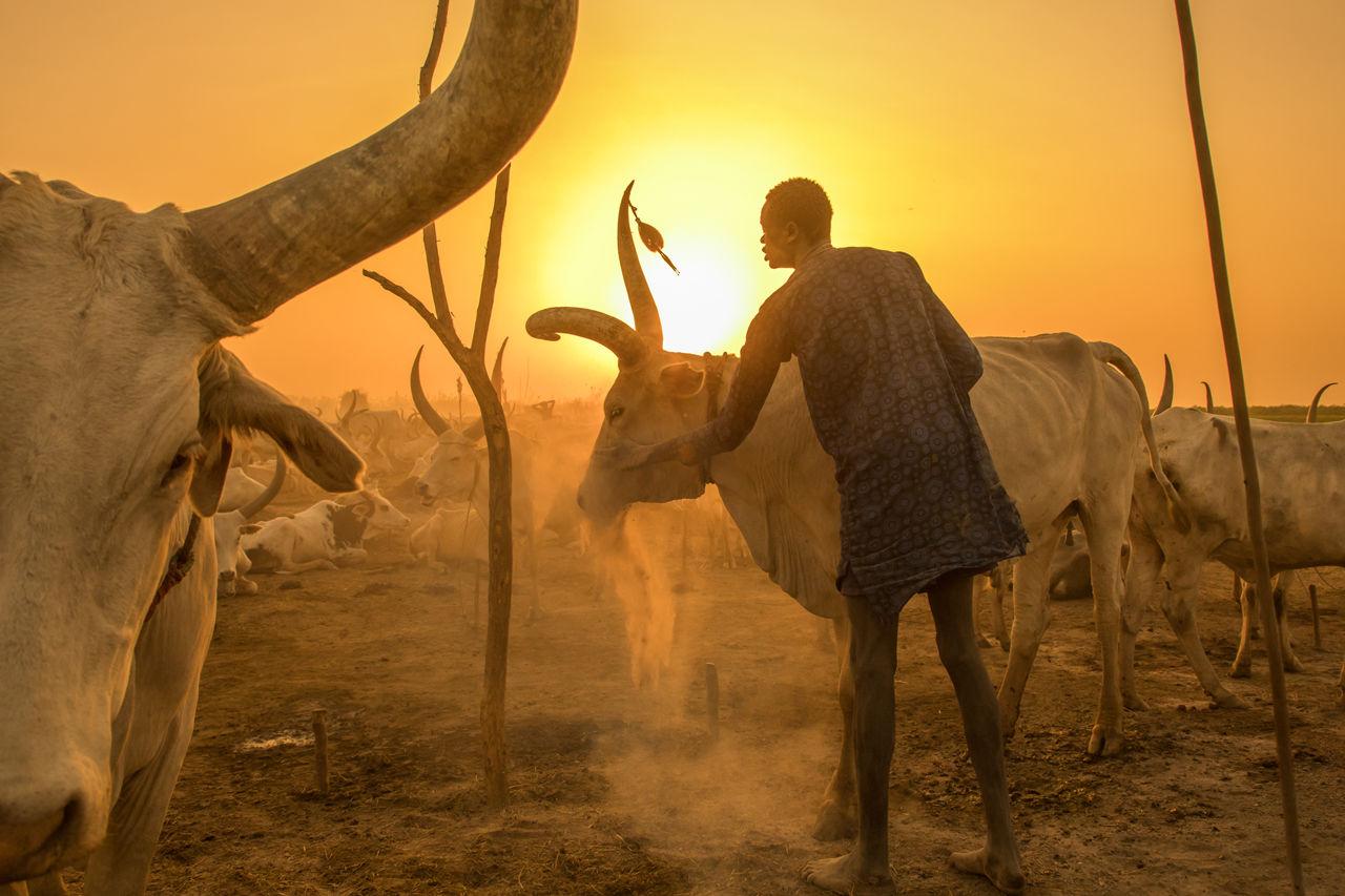 cattle_main_1280p.jpg