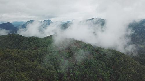 中国南方的亚热带常绿阔叶林(黄健摄).png
