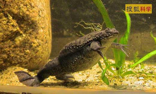 蛙卵细胞结构图