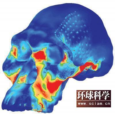 科学网-早期人类牙齿比现代人的坚硬