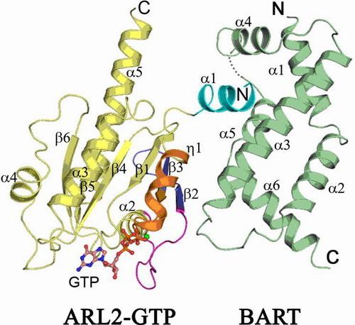 上海生化与细胞所细胞生物学b2002年招收硕士研究生入学考试试题和ppt
