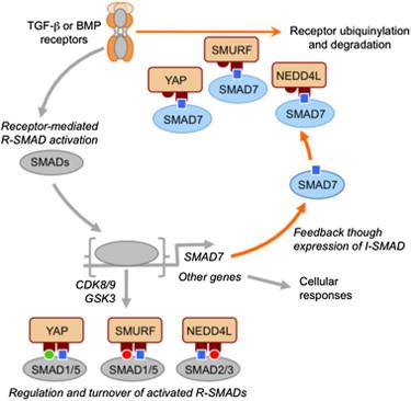 而mskcc的研究团队使用哺乳动物细胞和全长蛋白,对macias得到的每
