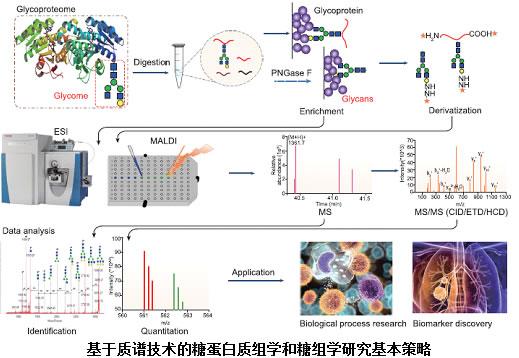 综述:基于质谱技术的糖蛋白质组学与糖组学研究进展