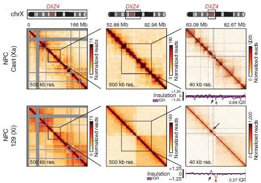 揭秘小鼠失活x染色体结构特征