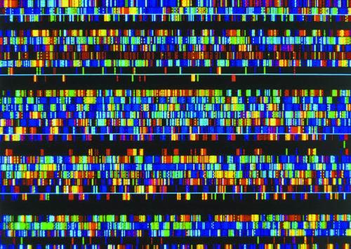 """填补空白!人类基因组""""拼图""""即将完成"""